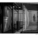 Urban Inmate #7 (Caged) (b&w photograph)