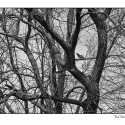Bird and Branches (black and white photograph)