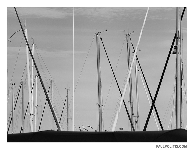 Birds and Masts (black and white photograph)