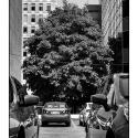 Tree and Parking Lot (black and white photograph)