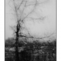 Tree Through Rainy Windshield (black and white photograph)