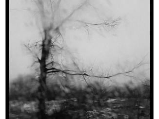 Tree Through Rainy Windshield (black and white photograph)