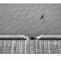 Adrift (black and white photograph)