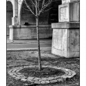 Tree and Underpass (black and white photograph)