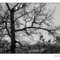 Seven Photos – Trees (black and white photographs)