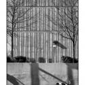 Walk (black and white photo)